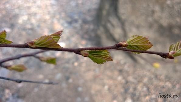 природа озера Имандра - путешествия и проза в блоге LioSta