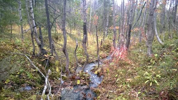Природа в окрестностях Кировска в сентябре
