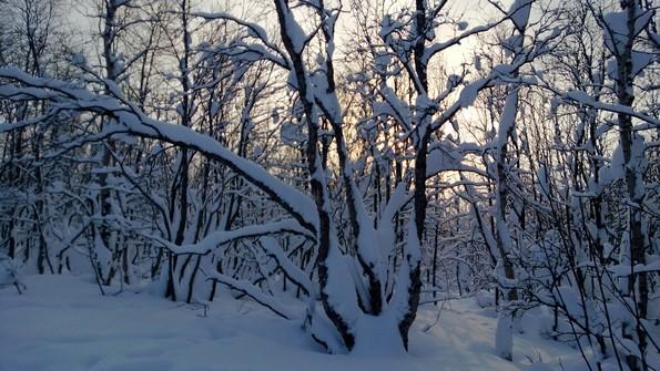 Кольский север зимой
