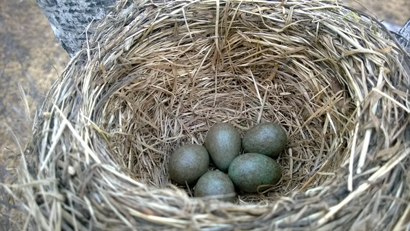 Птицы Кольского полуострова