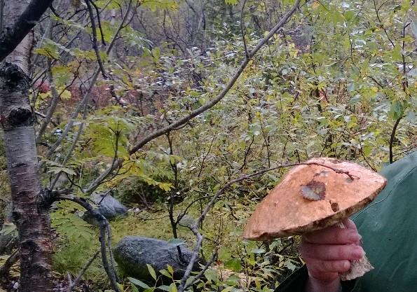 Природа Кольского полуострова - грибы